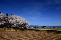 小沢八幡神社