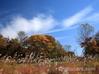 紅葉 駒止湿原