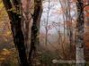 恵みの森 紅葉