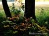 矢の原湿原 紅葉