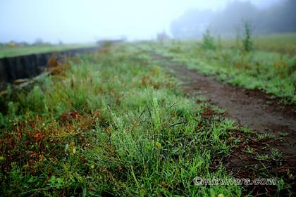 散歩道 野辺 霧