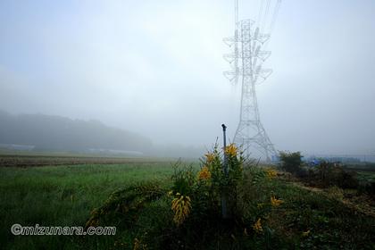 セイタカアワダチソウ 霧