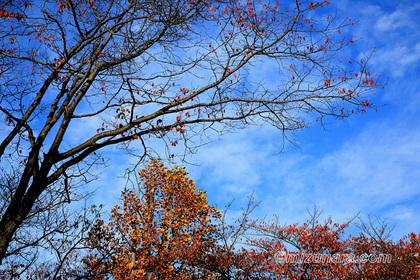 秋景 紅葉