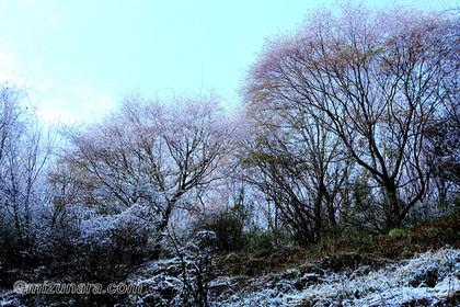 春の雪 須佐木