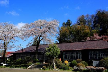 旧上岡小学校 桜
