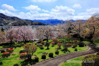 上山城 桜