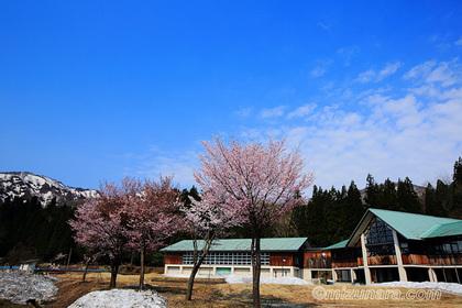 桜 玉川小中学校
