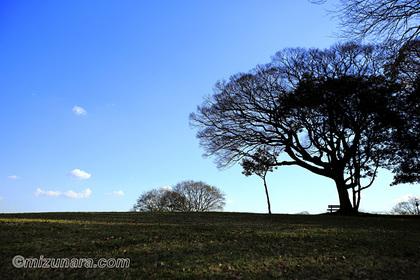 公園 冬空