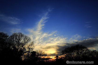 夕景 夕焼け 冬木立