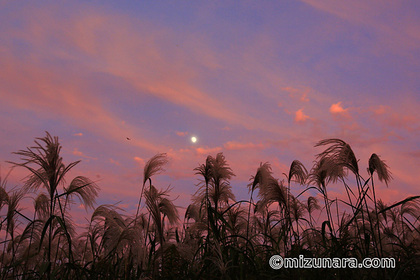 夕焼け 月