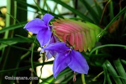 三陽メディアフラワーミュージアム 千葉市 名前不明 花の美術館