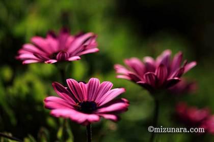 三陽メディアフラワーミュージアム 花の美術館