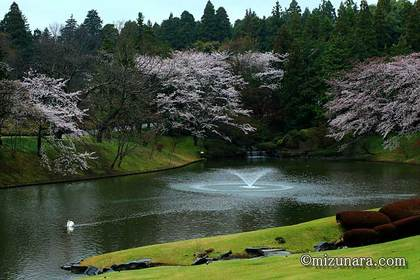 川村記念美術館 桜