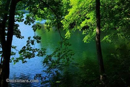 蔵王温泉 鴫の谷地沼