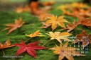 2017年11月 カレンダー壁紙 紅葉 落葉