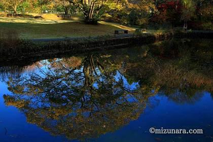 川村記念美術館 紅葉
