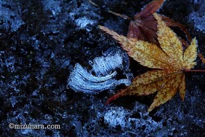 落葉 霜柱