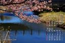 2018年2月 カレンダー壁紙 頼朝桜
