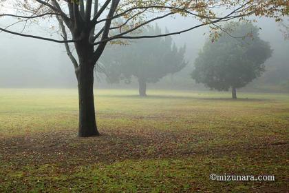公園 濃霧