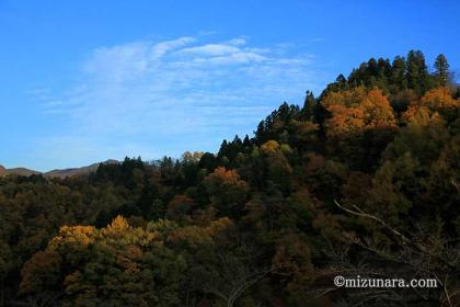 天童公園 紅葉 舞鶴山