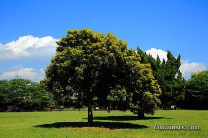 COVID-19 公園