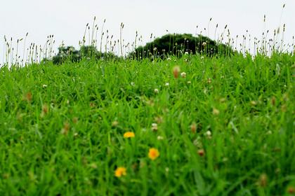公園の雑草