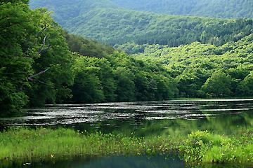 緑の観音沼