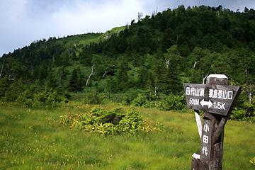 小田代湿原