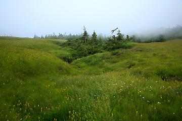 田代山頂上湿原