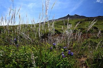 茶臼岳斜面