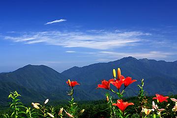 高原のユリ