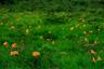 ニッコウキスゲの咲く沼原湿原