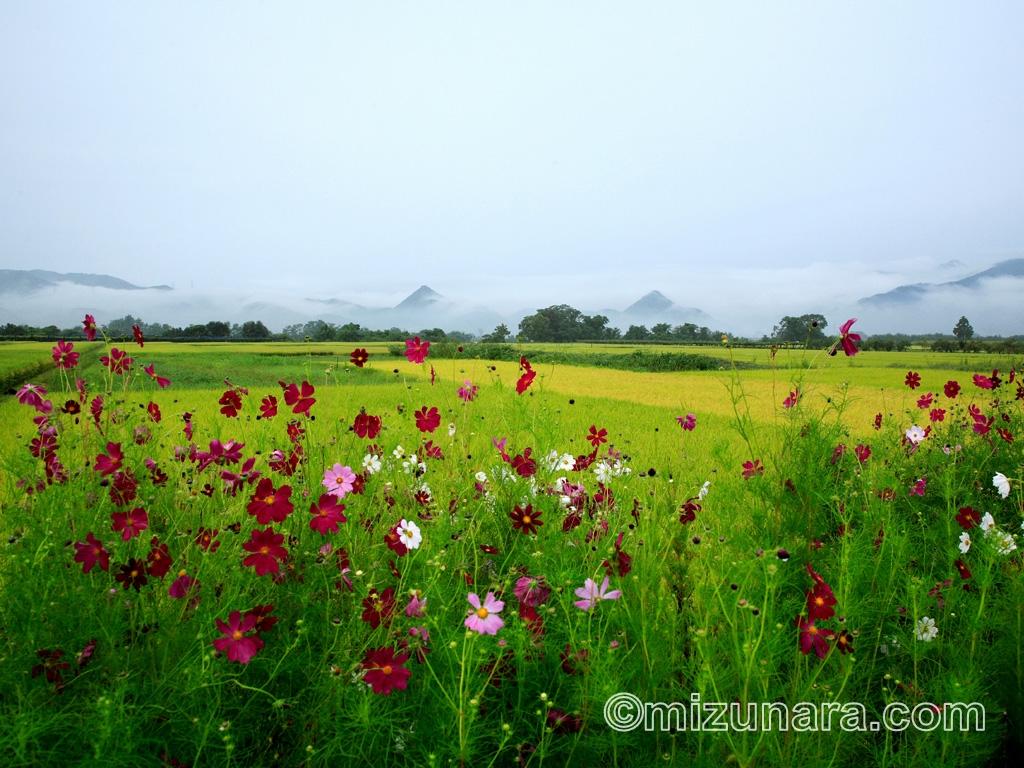 雨あがりの田園