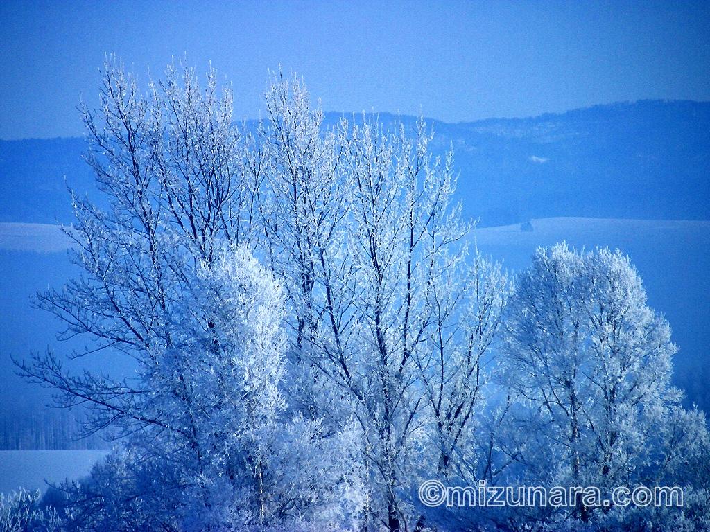 凍てつく木立
